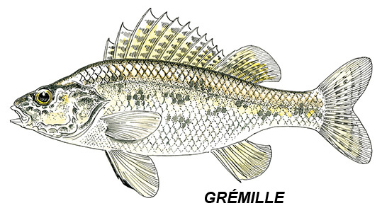 gremille