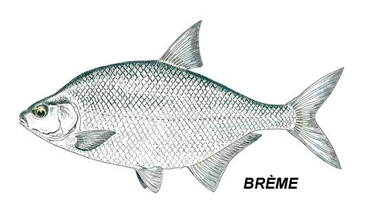 brème